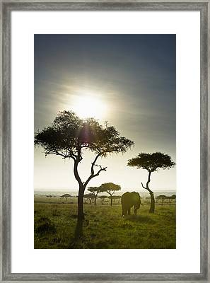 An Elephant Walks Among The Trees Kenya Framed Print by David DuChemin