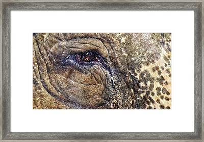 Framed Print featuring the photograph An Elephants Tear by Kelly Reber