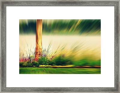 An Explosion Of Beauty Framed Print by Shalini George