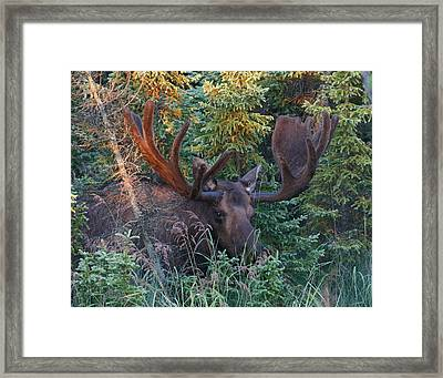 Framed Print featuring the photograph An Eye On You by Doug Lloyd