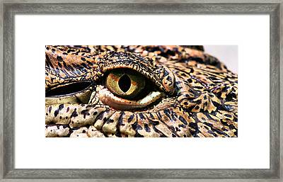 An Eye On You Framed Print by JC Findley