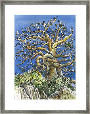 An Old Bristol Pine Framed Print