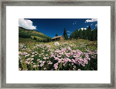 An Old Miners Cabin With Purple Asters Framed Print by Richard Nowitz