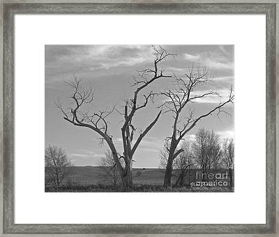 An Old Trees Framed Print by Yumi Johnson