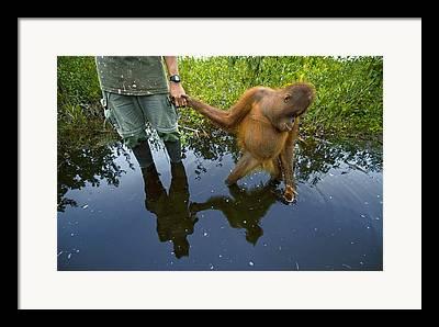 Borneo Island Framed Prints
