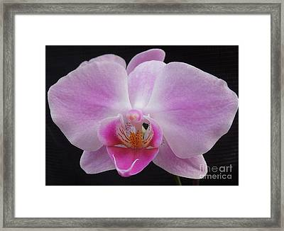 An Orchid Framed Print by Chad and Stacey Hall