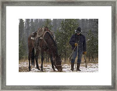 An Outfitter Lets His Horse Graze Framed Print by Annie Griffiths