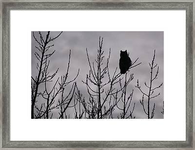 An Owl Silhouette Framed Print