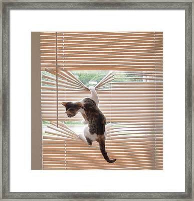 Ana Lucia Levelor 2 Framed Print by Elizabeth Sullivan
