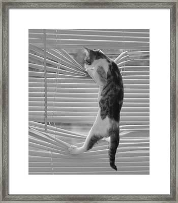 Framed Print featuring the photograph Ana Lucia Levelor Bw by Elizabeth Sullivan