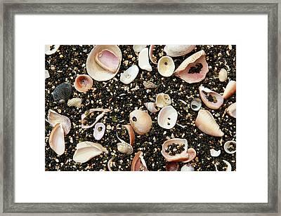 Anaeho'omalu Beach Framed Print by Joanne Riske