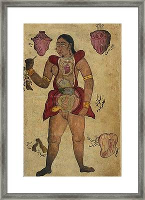 Anatomical Illustration Of A Pregnant Framed Print by Everett