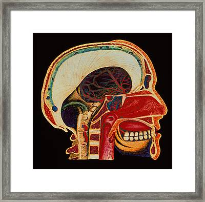 Anatomy Of Head Framed Print by Mehau Kulyk