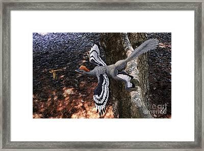 Anchiornis Huxleyi  Framed Print by Julius Csotonyi