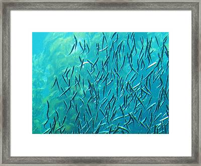 Anchovies Framed Print by Anne Canright