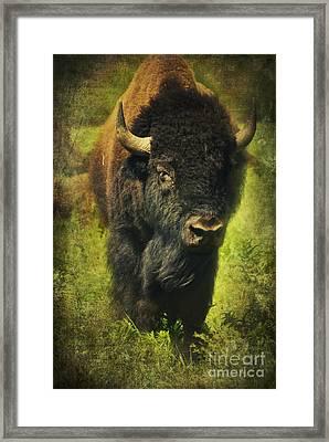 Ancient Bison Framed Print
