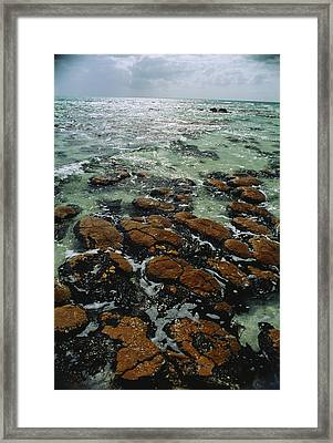 Ancient Stromatolite Reefs Still Framed Print by O. Louis Mazzatenta