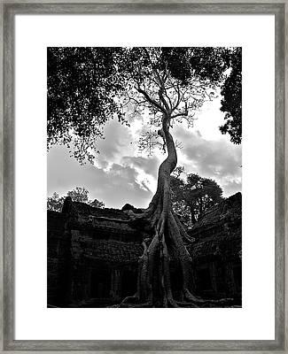 Ancient Tree Framed Print by Arj Munoz