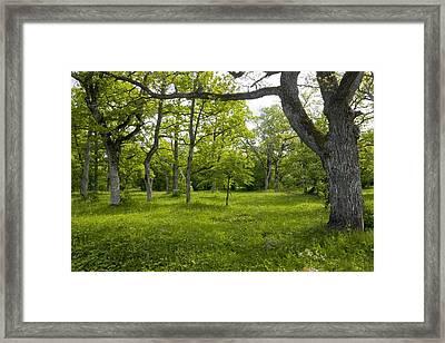 Ancient Wood Pasture, Estonia Framed Print
