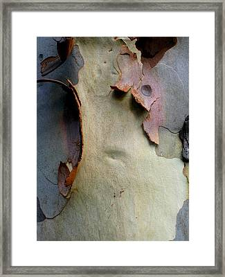 And God Made Trees Framed Print