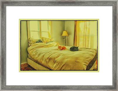 Framed Print featuring the photograph Andi's Cats by Kimberleigh Ladd