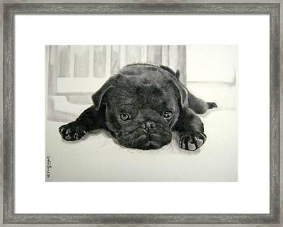 Andy's Puppy Framed Print