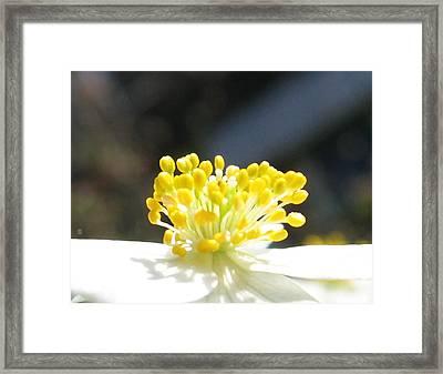 Anemone Framed Print by Greta Thorsdottir