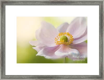 Anemone Haze Framed Print