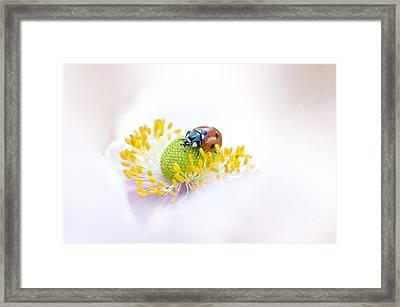 Anemone Lady Framed Print