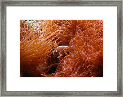 Anemone Framed Print by Luis Esteves