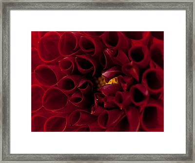 Anemone Framed Print by Shannon Workman