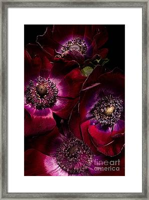 Anemones Framed Print by Ann Garrett