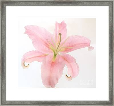 Angel Lily Framed Print by Marsha Heiken