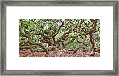 Angel Oak Framed Print by Val Miller