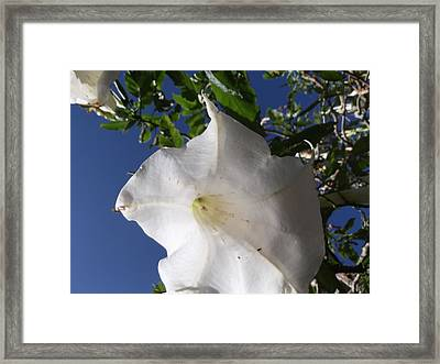 Angel Skirts Framed Print by Heather Jett