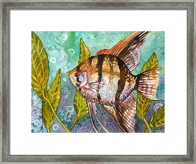 Angelfish Framed Print