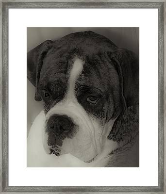 Angelic Boxer Framed Print by DigiArt Diaries by Vicky B Fuller
