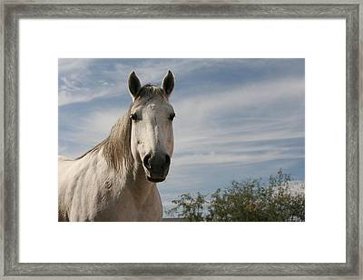 Angelina Framed Print by Wendi Curtis