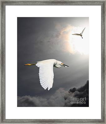 Angels Of The Night Sky Framed Print by Wingsdomain Art and Photography