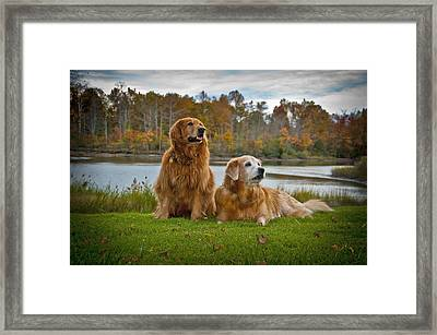 Angus And Lucky Framed Print