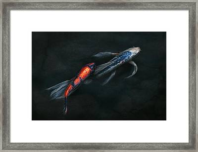 Animal - Fish - Beauty And Grace  Framed Print