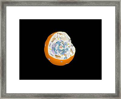Animal Cell Anatomy, Artwork Framed Print by Francis Leroy, Biocosmos