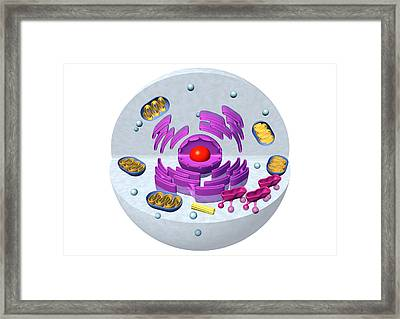 Animal Cell Structure, Computer Artwork Framed Print