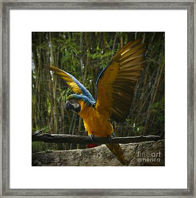 Animal Kingdom - Flights Of Wonder Framed Print