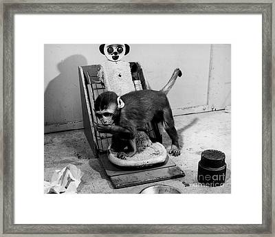 Animal Research Framed Print by Photo Researchers, Inc.