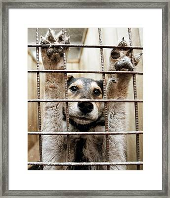 Animal Shelter, Russia Framed Print by Ria Novosti