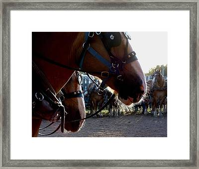 Animals Draft Horse Pull Framed Print