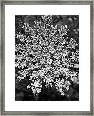Anne In Monochrome Framed Print by Beth Akerman