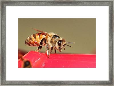 Another Bee Framed Print