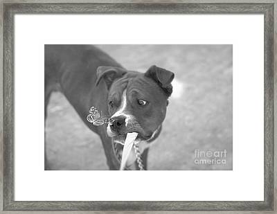 Framed Print featuring the photograph Another Butterfly After My Friends Dog by John  Kolenberg